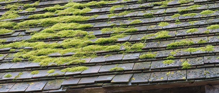 Comment traiter efficacement la mousse sur le toit ?
