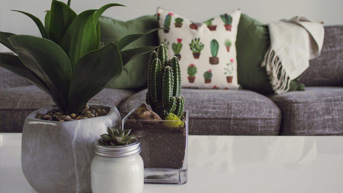 Cactus : comment intégrer ce détail déco à votre intérieur ?