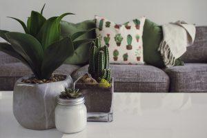 plante verte dans le salon